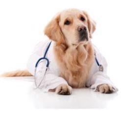 Medicine & Medical Supplies